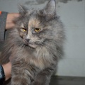45314 - KITTY GREY (TATJANA)
